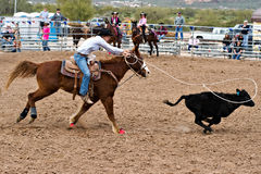 Calf roper. APACHE JUNCTION, AZ - FEBRUARY 26: A woman participates in the calf roping competition at the Lost Dutchman Days Rodeo on February 26, 2010 in Apache Royalty Free Stock Photos