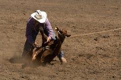 Calf roper makes a tie. Calf roper at 2006 Russian River Rodeo, Duncans Mills, California Stock Photo