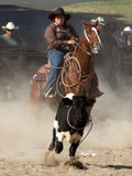 Calf Roping Stock Photo