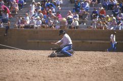 Calf roping, Royalty Free Stock Photos