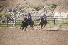 Calf roping,. Inter-Tribal Ceremonial Indian Rodeo, Gallup NM Stock Photography
