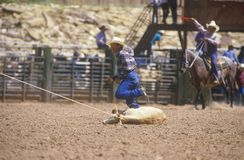 Calf roping. Inter-Tribal Ceremonial Indian Rodeo, Gallup NM Royalty Free Stock Photos