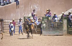Calf roping,. Inter-Tribal Ceremonial Indian Rodeo, Gallup NM Stock Image