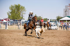 Calf Roping Royalty Free Stock Images