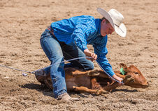 Calf Roping Royalty Free Stock Photography