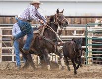 Calf Roping Action Stock Photos