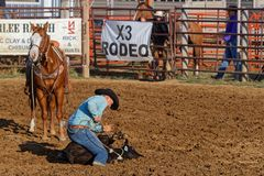 Calf Roping in the arena stock photography