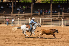 Calf Roping Competition Deadwood South Dakota royalty free stock photography