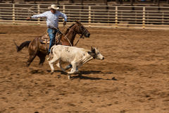 Calf Roping Competition in Deadwood South Dakota Royalty Free Stock Images