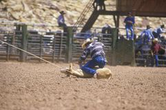 Calf roping competition, Inter-Tribal Ceremonial Indian Rodeo, Gallup NM Royalty Free Stock Photos