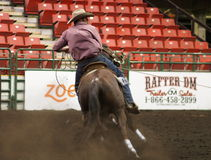 Calf Roping Cowboy On Horseback. Calf roper At Farmfare International Edmonton Alberta November 2014 Royalty Free Stock Images