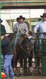 Calf Roping Cowboy On Horseback. Calf roper At Farmfare International Edmonton Alberta November 2014 Royalty Free Stock Image