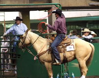 Calf Roping Cowboy On Horseback Royalty Free Stock Photography