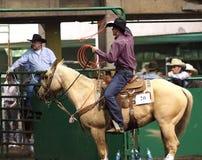Calf Roping Cowboy On Horseback. Calf roper At Farmfare International Edmonton Alberta November 2014 Royalty Free Stock Photography