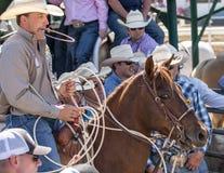 Calf Roping Cowboy Stock Images