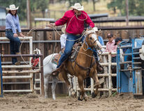 Calf Roping. A cowboy tries lasso a calf  at the rodeo in Cottonwood, California Stock Images