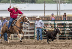 Calf Roping Stock Photography