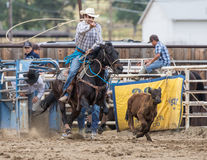Calf Roping. A cowboy tries to  lasso a calf  at the rodeo in Cottonwood, California Stock Photo