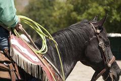 Calf Roping. Cowboy waiting for a calf roping event at a western rodeo Royalty Free Stock Photography