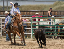 Calf Roping Cowgirl Royalty Free Stock Images
