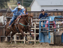 Calf Roping. A cowgirl tries lasso a calf  at the rodeo in Cottonwood, California Stock Image