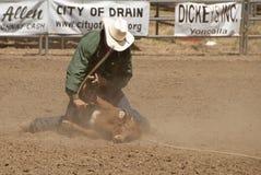 Calf Roping Stock Image