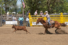 Calf Roping. Event at the Yoncalla Rodeo on the 4th of July, NWPRA stop in this small southern Oregon town Royalty Free Stock Photos