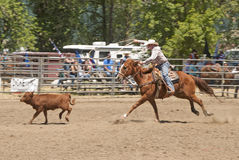 Calf Roping. Event at the Yoncalla Rodeo on the 4th of July, NWPRA stop in this small southern Oregon town Royalty Free Stock Photography
