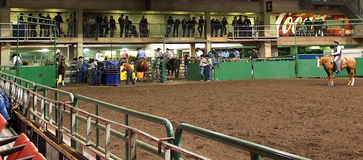 Calf Roping Official On Horseback In Arena Royalty Free Stock Images