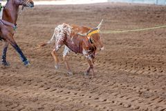 Calf Roping At An Outback Rodeo