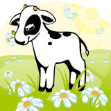Calf stands on a flower meadow. Stock Images