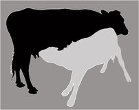 Calf suckling milk, silhouette vector Royalty Free Stock Photography