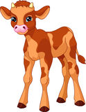 Calf. Young calf on white background Stock Photo