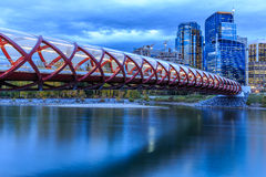 Calgary bij nacht royalty-vrije stock afbeelding