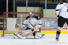 Calgary Flames Goalie Mason McDonald Royalty Free Stock Photography