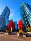 Calgary som är i stadens centrum under höst, Alberta, Kanada arkivbild