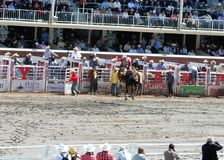 Calgary Stampede Rodeo. July 11, 2011 Royalty Free Stock Photo