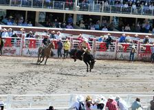 Calgary Stampede Rodeo. July 11, 2011 Stock Image