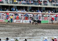 Calgary Stampede Rodeo Royalty Free Stock Photo