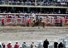 Calgary Stampede Rodeo. July 11, 2011 Royalty Free Stock Images
