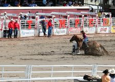 Calgary Stampede Rodeo. July 11, 2011 Stock Photos
