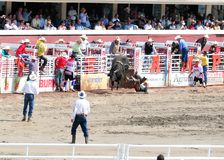 Calgary Stampede Rodeo. July 11, 2011 Royalty Free Stock Photos