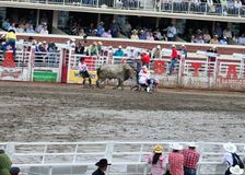 Calgary Stampede Rodeo. July 11, 2011 Stock Photography