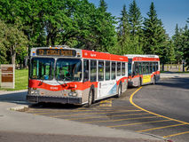 Calgary transportu autobus Obrazy Royalty Free