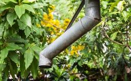 Calha da chuva e fundo da árvore Fotografia de Stock