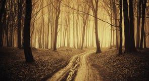 Calha da estrada uma floresta escura com névoa Fotos de Stock