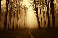 Calha da estrada uma floresta surreal assustador escura com névoa Imagem de Stock
