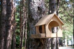 Calha de alimentação para pássaros na árvore no parque Imagem de Stock Royalty Free