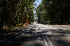 Calha do enrolamento da estrada secundária uma floresta australiana do eucalipto imagem de stock royalty free