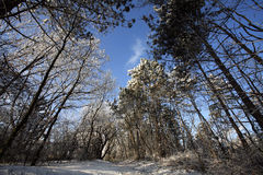 Calha do trajeto uma floresta congelada com geada e neve no inverno Foto de Stock